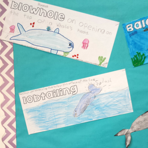 whale fact posters activity
