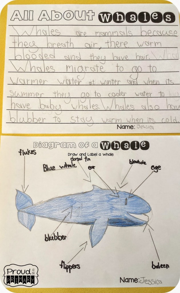 whales for kids writing activity