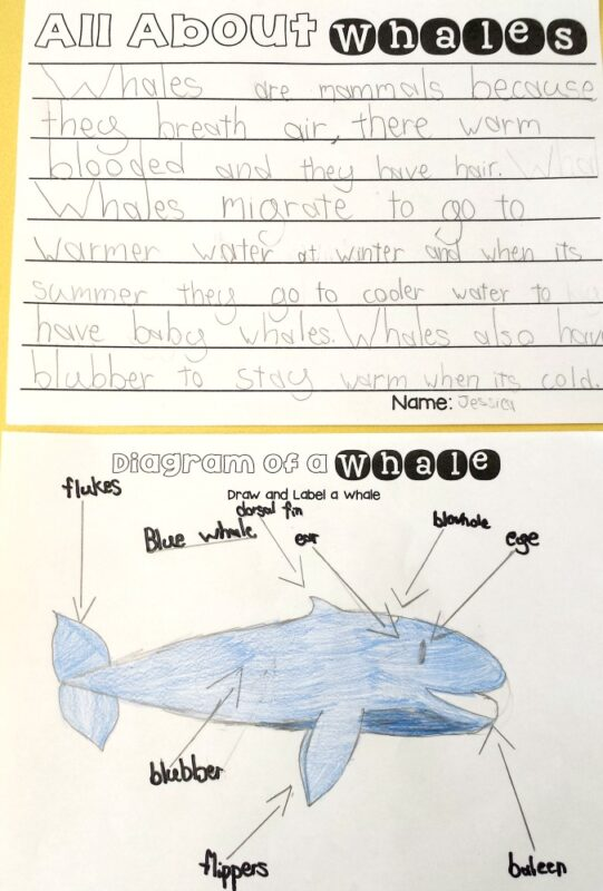 whales for kids: non-fiction fact writing