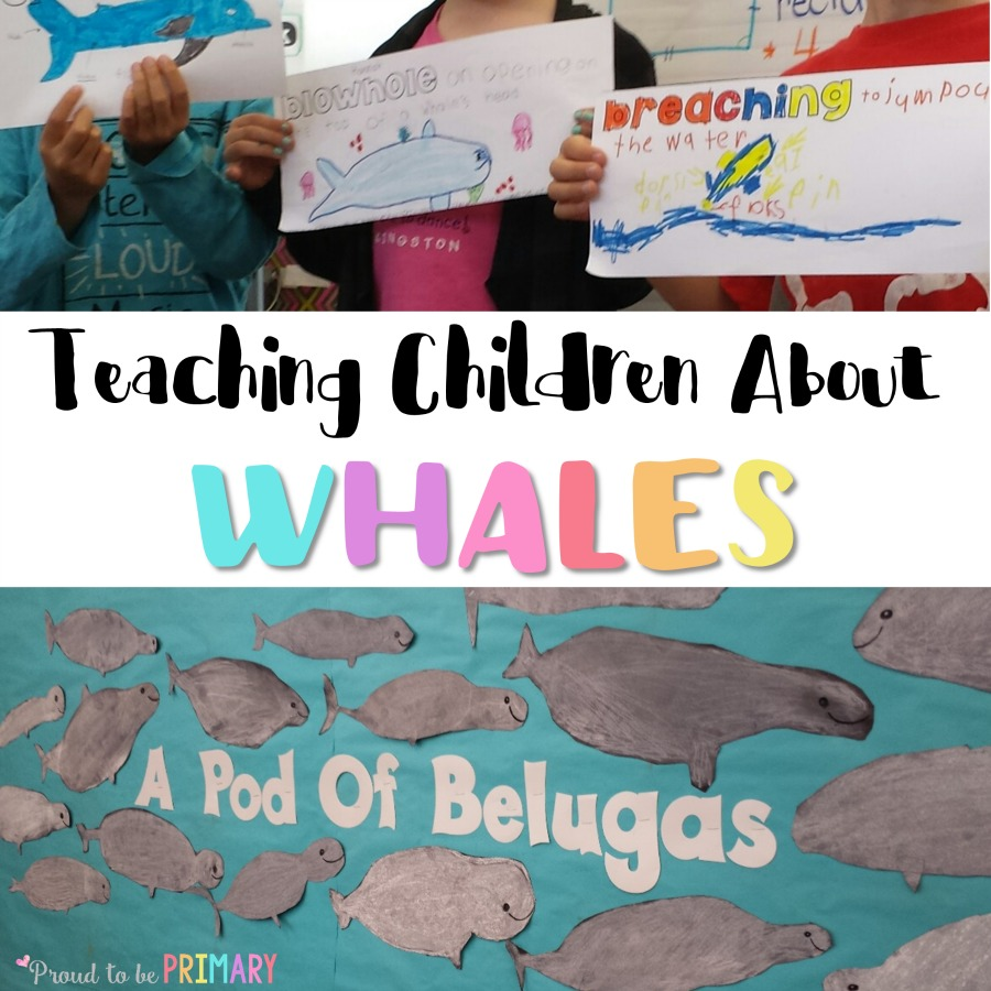Teaching children about whales in the classroom? Read this post for a beluga directed drawing idea, activity to build whale vocabulary, and engage your primary students in science and ELA lessons.