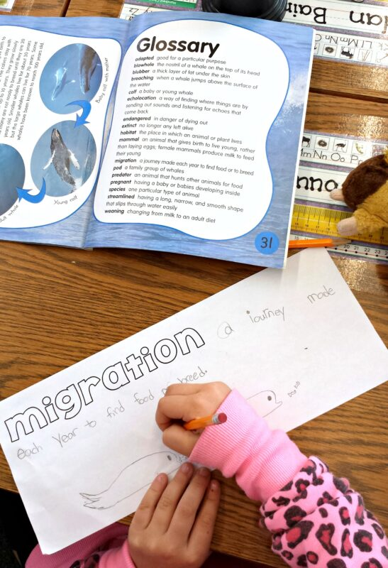 whale vocabulary activity for kids