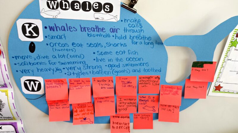 whales for kids: kwl poster
