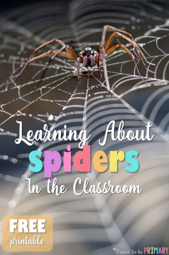 Tons of ELA and science lesson ideas and activities for learning about spiders in the primary classroom. Includes free spider printable.