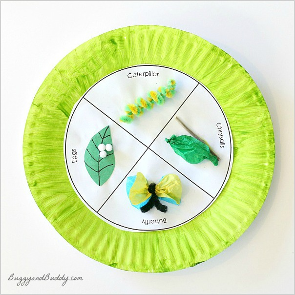 Buggy and Buddy - Butterfly Life Cycle Craft